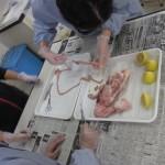 6年生 鶏の解剖